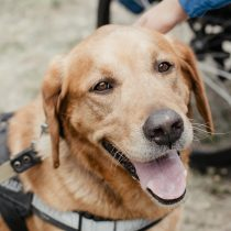 Assistance Animals – A Nationally Consistent Approach